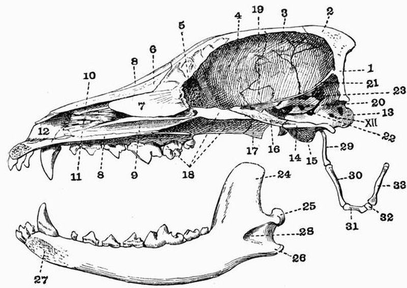 i_404 the project gutenberg ebook of the vertebrate skeleton, by sidney h