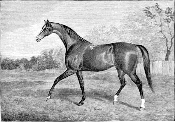 The project gutenberg ebook of horses past and present by walter the darley arabian foaled 1702 fandeluxe Gallery