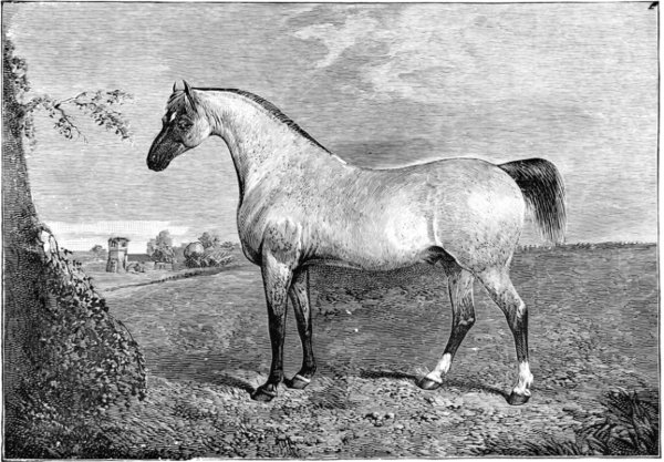 The project gutenberg ebook of horses past and present by walter the project gutenberg ebook of horses past and present by walter gilbey fandeluxe Gallery