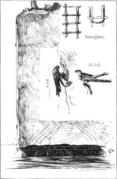 vogelscheuchen drachen system kaufen