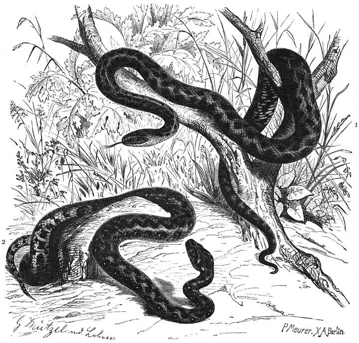 slang bijt man gif