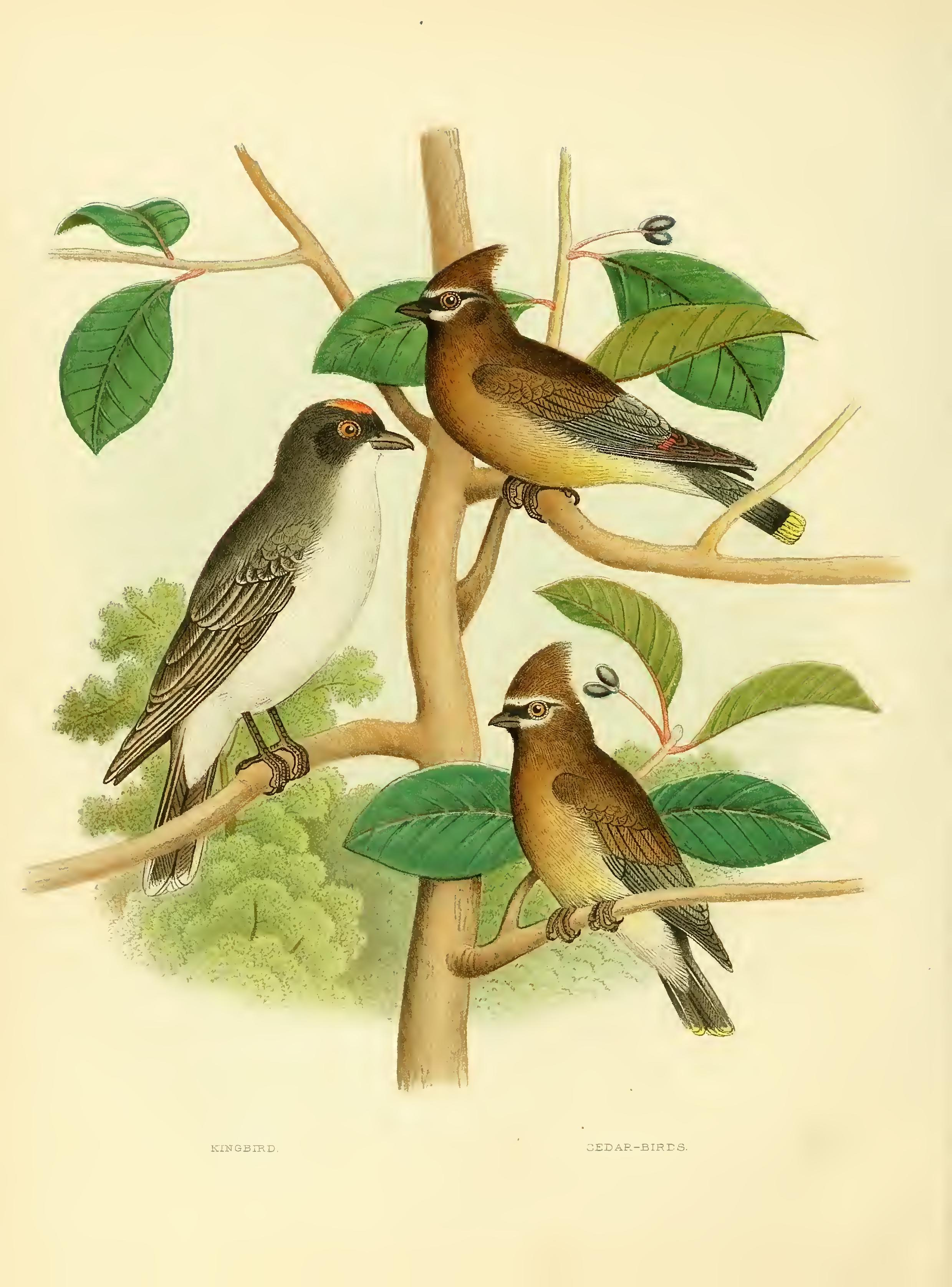 The Nests And Eggs Of Birds United States By Thomas G Gentry