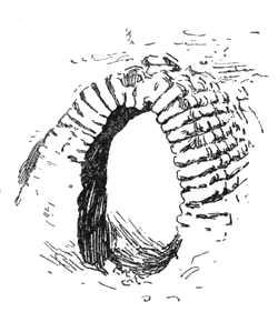 Arch at Tellô.