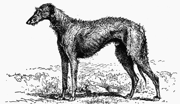 The Project Gutenberg Ebook Of All About Dogs By Charles Henry Lane