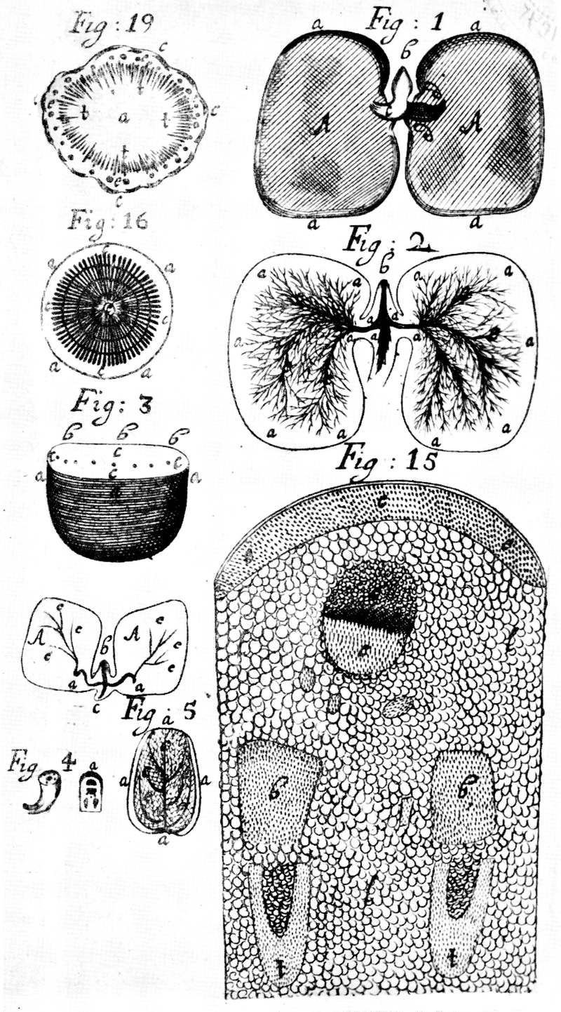 The Project Gutenberg eBook of Makers of British Botany, edited by ...