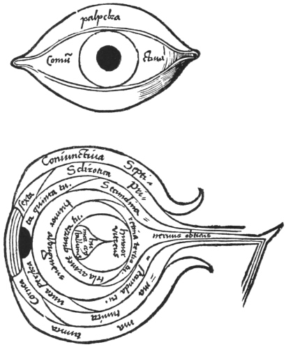 Showing The Seven Tunics And Three Humours Of Eye According To Doctrines Renaissance Anatomists196