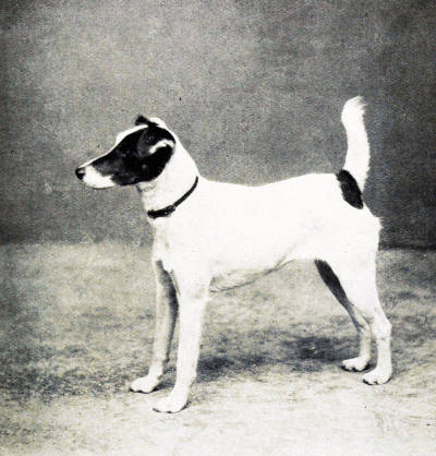The Project Gutenberg eBook of Sporting Dogs, by Frank Townend Barton