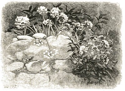 flower arrangement home decor allium rustic arrangement.htm the project gutenberg ebook of the wild garden  by william robinson  gutenberg ebook of the wild garden