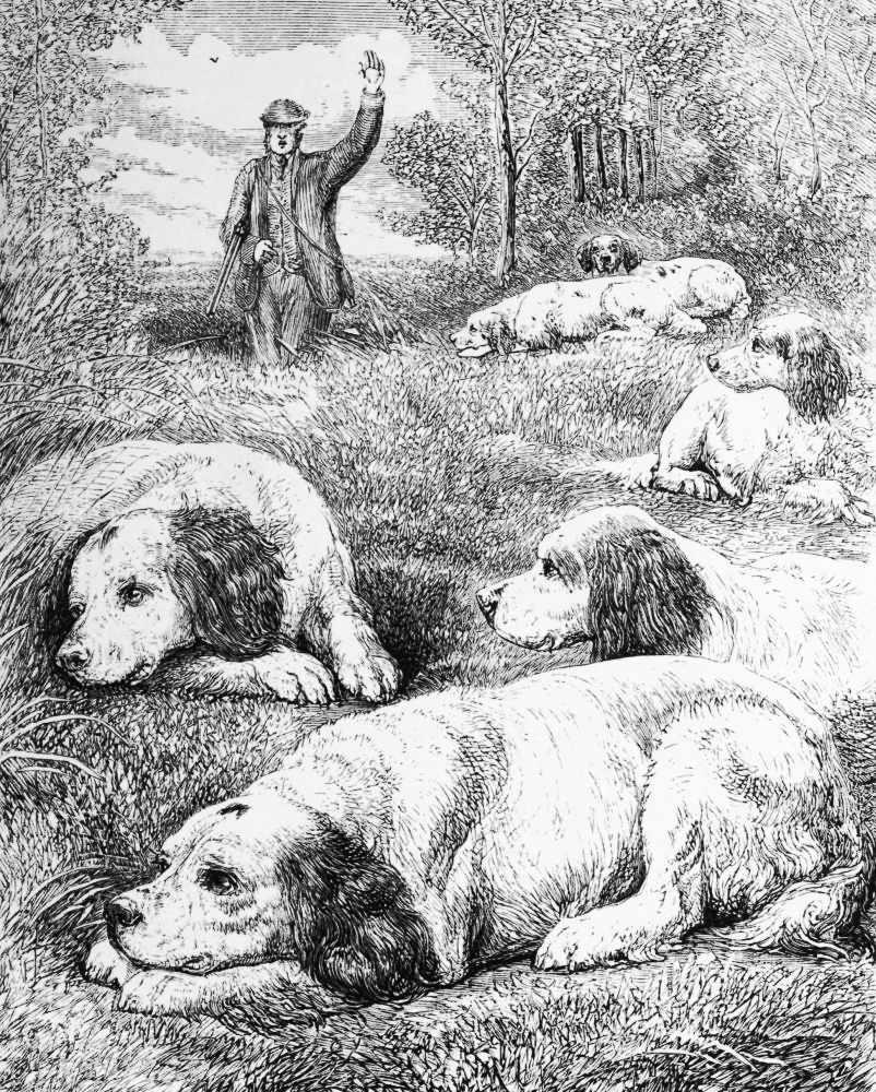 The Project Gutenberg Ebook Of Dog Breaking By Major General W N Sealskeletondiagram Ferret Skeleton Monk Seal Larger Image