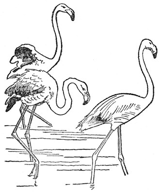 The Project Gutenberg Ebook Of Zoology The Science Of Animal Life