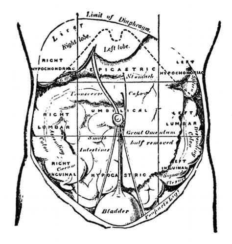 Anatomy And Embalming By Albert John Nunnamaker And Charles O Dhonau