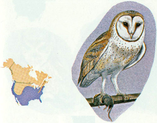 Cavity Nesting Birds Of North American Forests By Forest Service