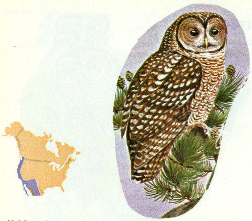 Habitat This Uncommon Owl Occurs In Most Old Age Conifer Associations The Western United States Forsman 1976 Located 123 Pairs Oregon