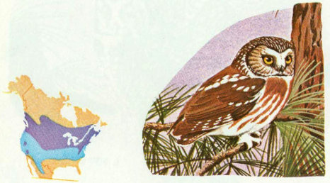 Habitat Saw Whet Owls Are Small Nocturnal Hunters Of The Deep North Woods They Nest In Rocky Mountains Up To About 11000 Feet Bailey And Niedrach