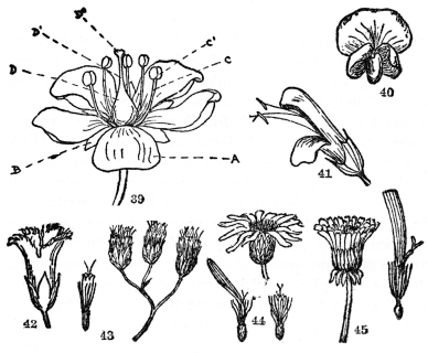 The Project Gutenberg Ebook Of Botany By Norman Taylor