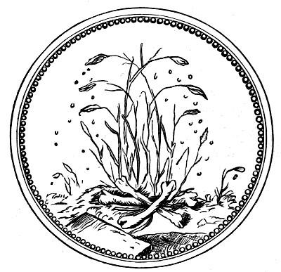camerarius 1595