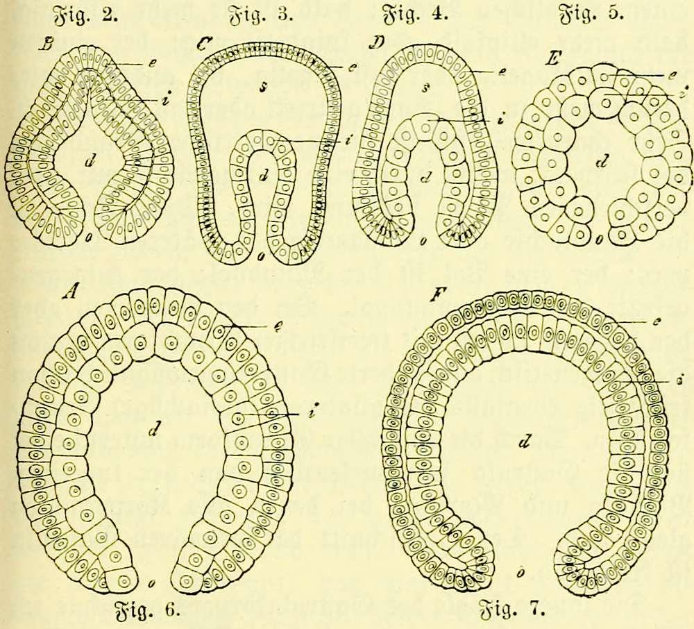 The Project Gutenberg eBook of Natur und Mensch, by Ernst Haeckel
