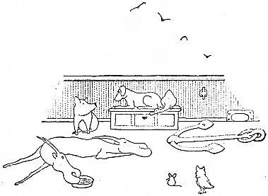 animals on deck
