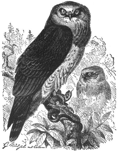 The Project Gutenberg Ebook Of Our Animal Friends In Their Native Homes