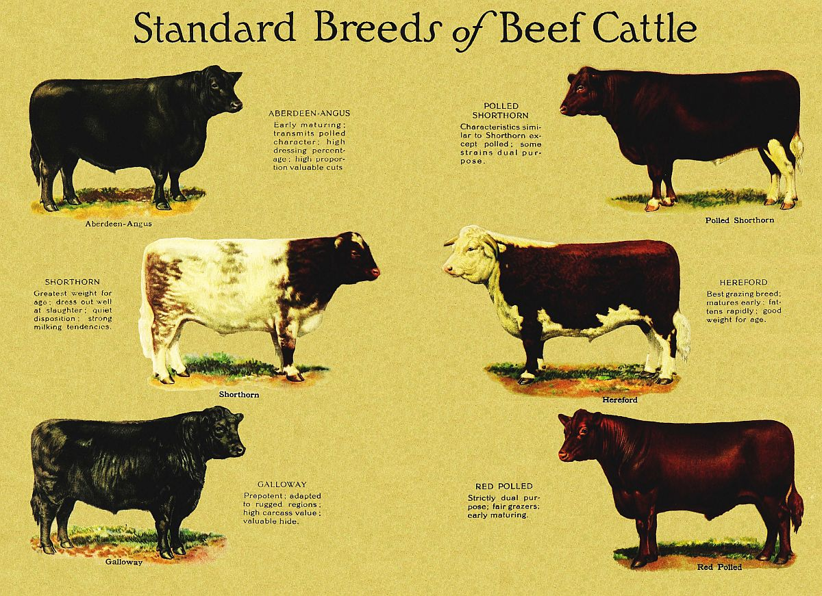 The Project Gutenberg Ebook Of The Livestock Producer And