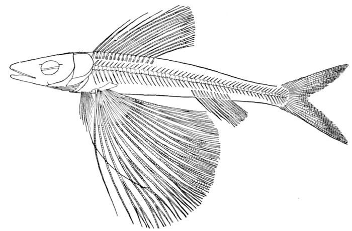 The Project Gutenberg Ebook Of Guide To The Study Of Fishes By