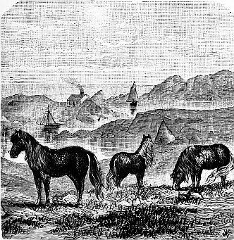 Fine Quality Brown//Black Shetland Pony with White Nose.Horse.Leonardo.Gift Box