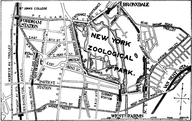 Popular Official Guide To The New York Zoological Park By William T
