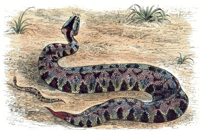 The Project Gutenberg EBook Of Snakes By Catherine Cooper Hopley