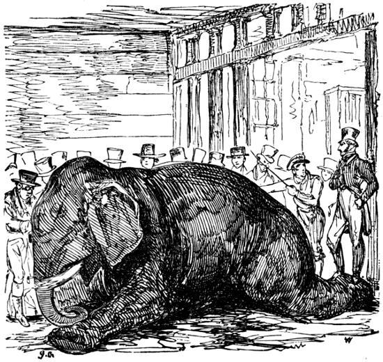 Bull wrecks darksome hole