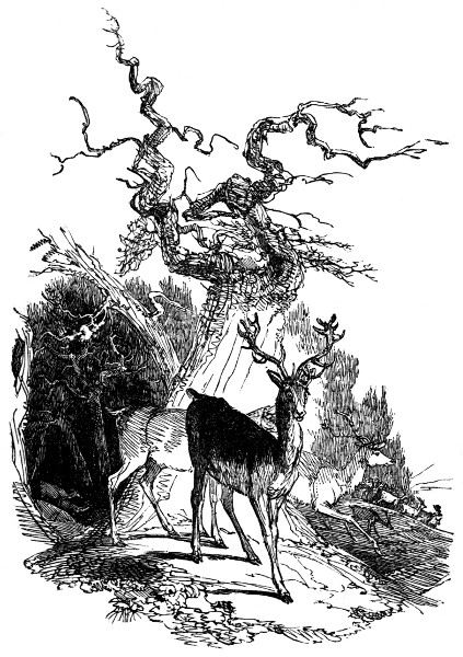 emigration of the deer from cranbourn chase 1826