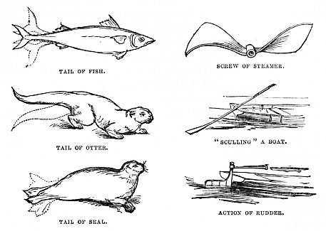 """9d05cac6f97 Image unavailable  TAIL OF FISH. SCREW OF STEAMER. TAIL OF OTTER. """""""