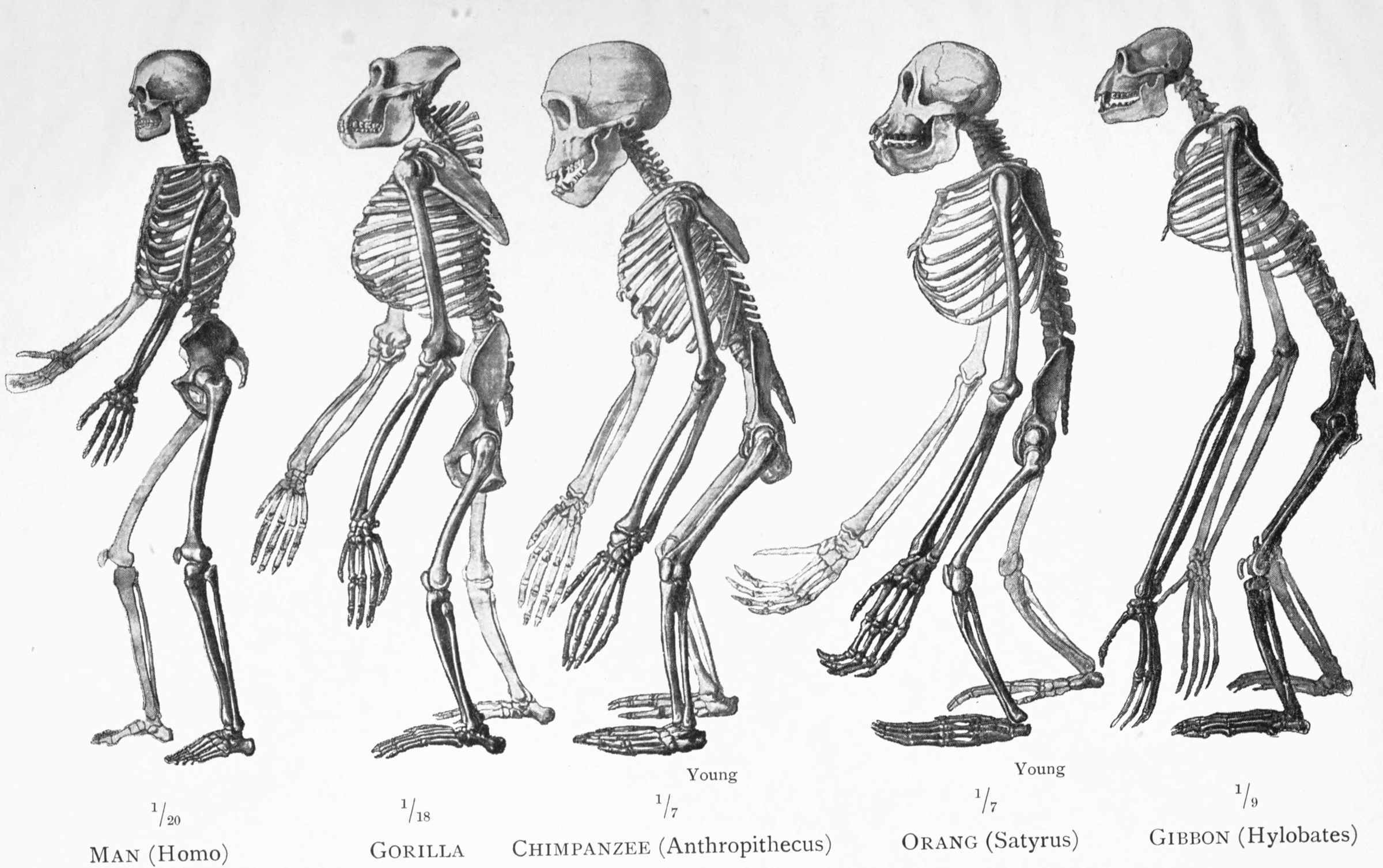 The Project Gutenberg eBook of Last Words on Evolution , by Ernst ...