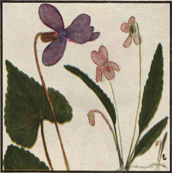 Texas flowers in natural colors by natt n dodge a project missouri violet lance leaved violet fandeluxe Image collections