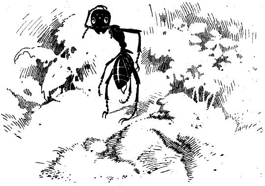 hautflügler familie mit 6 buchstaben