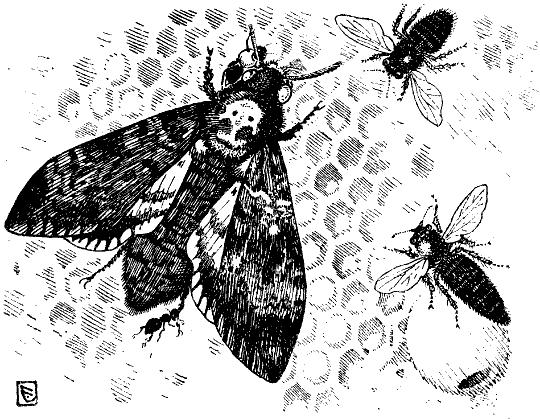 nützliches insekt 5 buchstaben