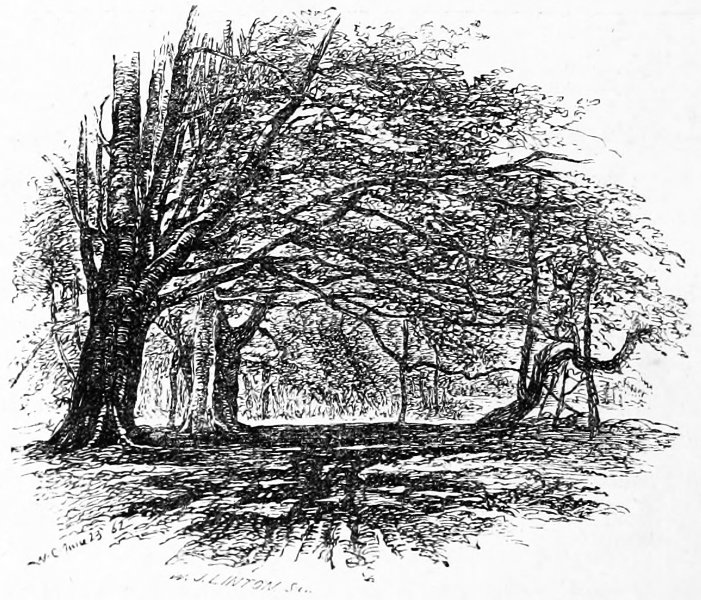 The new forest a project gutenberg ebook the woodcutters track between mark ash and winding shoot fandeluxe Image collections
