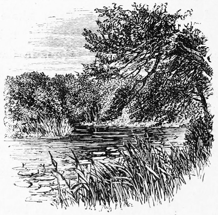 The New Forest a Project Gutenberg eBook
