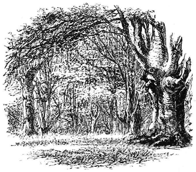 image276