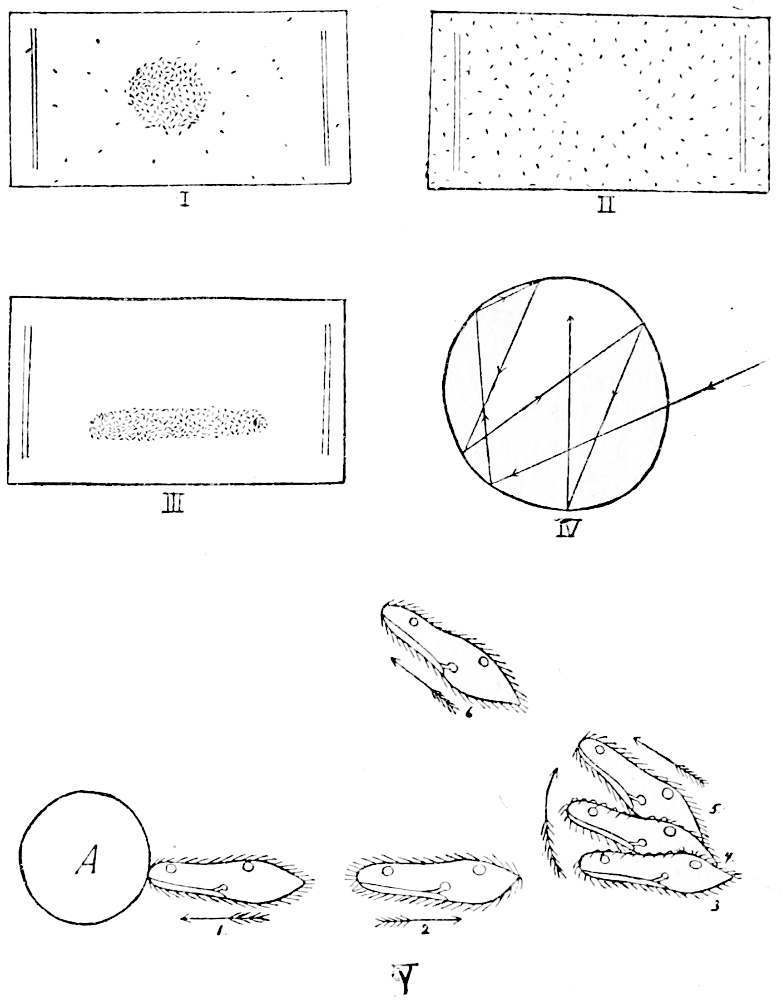 Animal behaviour by c lloyd morganthe project gutenberg ebook fig 2behaviour of paramecia after jennings fandeluxe Images