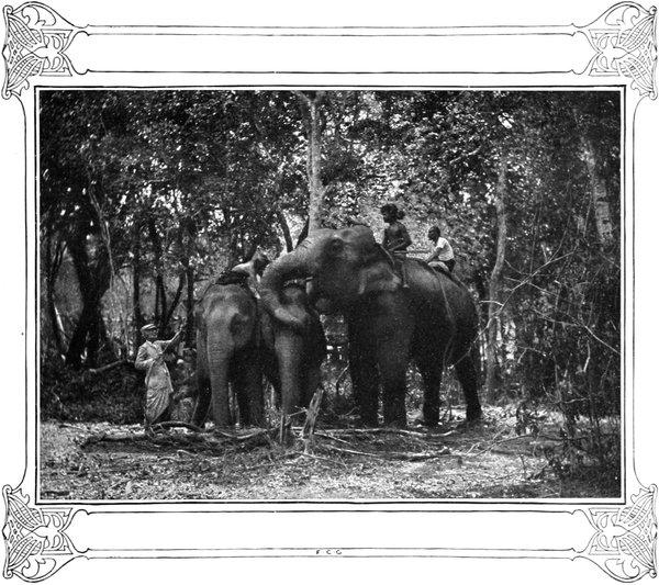 Trans Cap Hat Shape Elephant Delirium Tremens New
