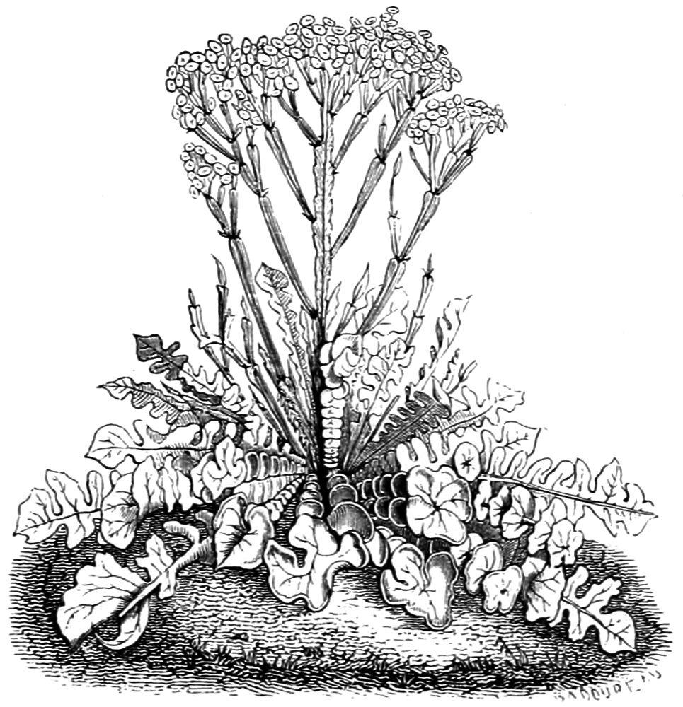 Quand Et Comment Tailler Une Passiflore the project gutenberg ebook of les fleurs animées, tome 1