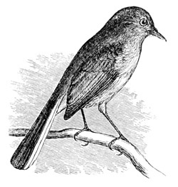 The Project Gutenberg EBook Of North American Land Birds Vol 1 By