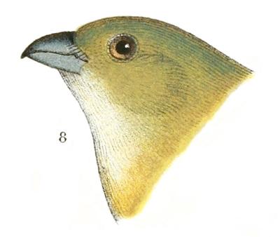 5b9b5ec4c The Project Gutenberg ebook of North American Birds