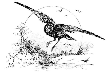 Contemporáneo Pájaros Enojados Espacio Para Colorear Aves Pájaro De ...