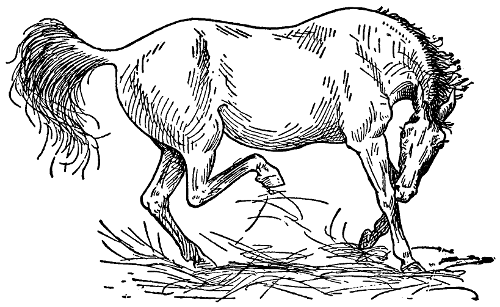 The Project Gutenberg Ebook Of The Farmers Veterinarian By Charles