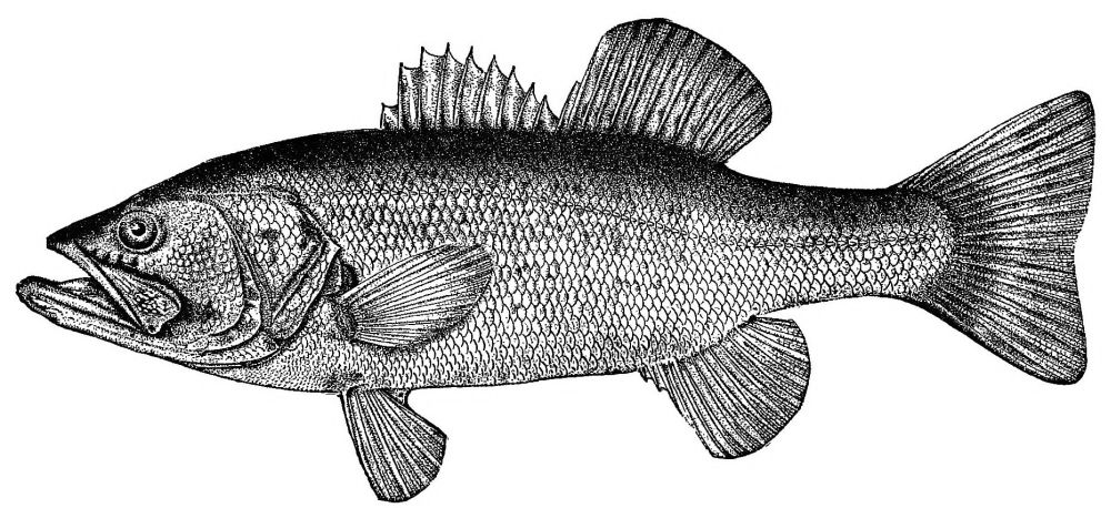 The project gutenberg ebook of game fish of the northern states and the project gutenberg ebook of game fish of the northern states and british provinces by robert barnwell roosevelt fandeluxe Choice Image