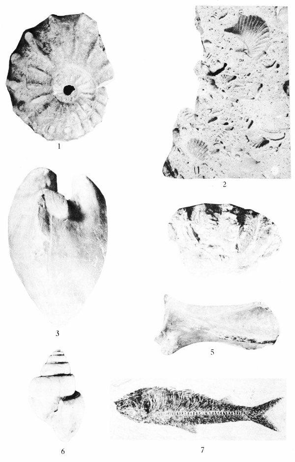 Texas Fossils: a Project Gutenberg eBook