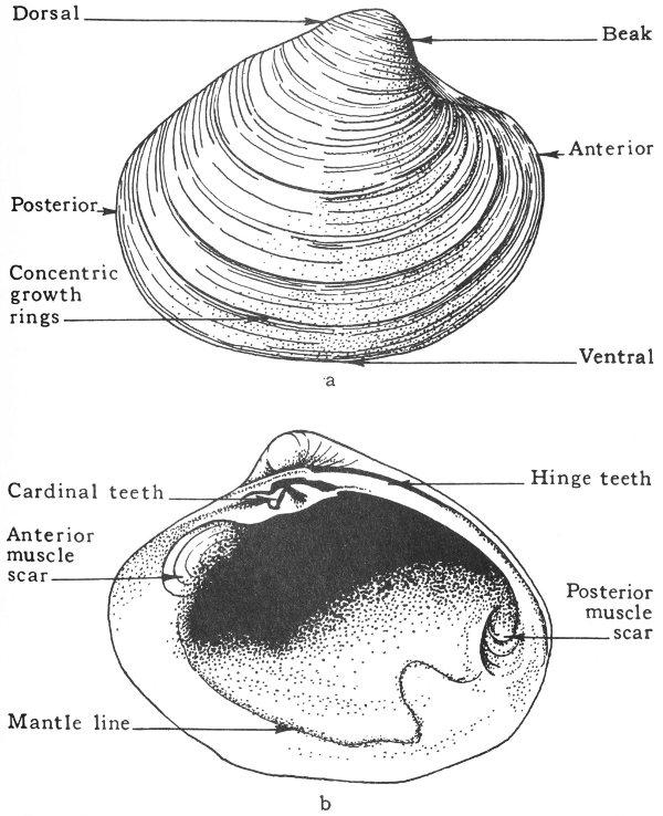 Texas Fossils A Project Gutenberg Ebook