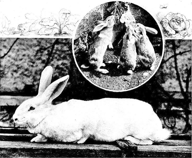 Unsere Haustiere vom Standpunkte ihrer wilden Verwandten, by Theodor ...