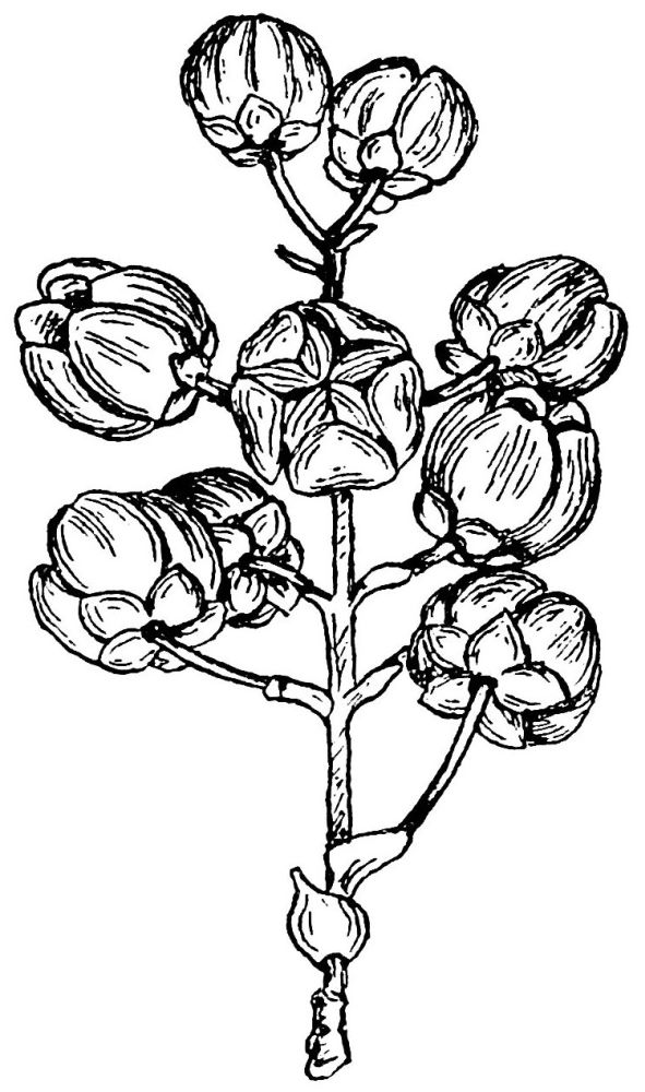 The Project Gutenberg Ebook Of Aspects Of Plant Life By Robert